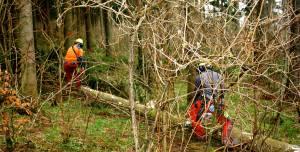servicios-forestales-catalunya-socialforest-12